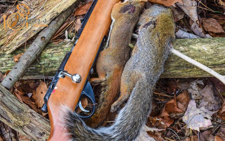 How to Make A Squirrel Jerky